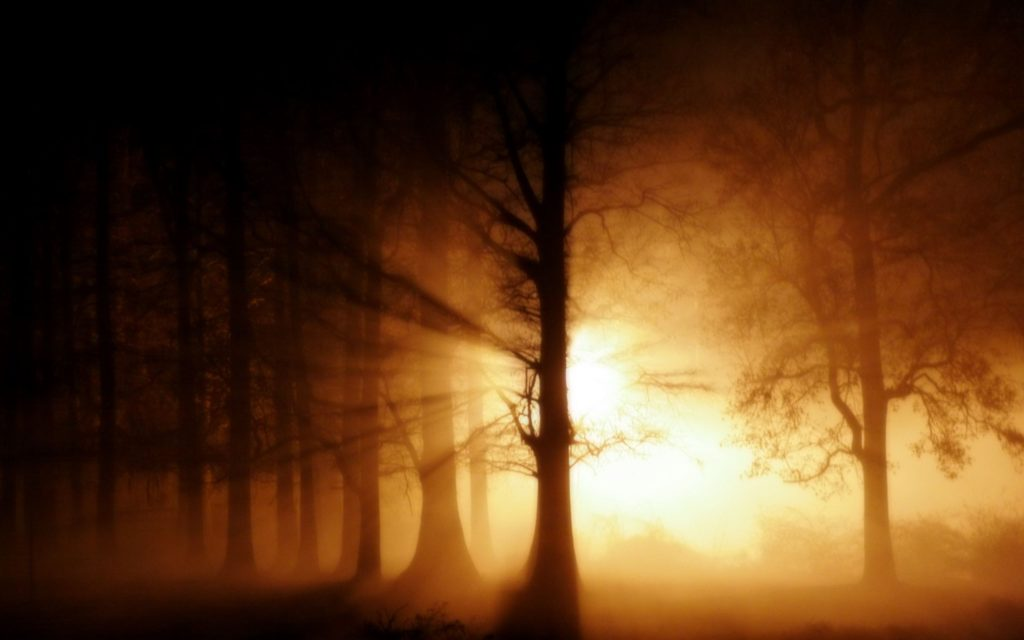 Foggy_Forest_Wallpaper_by_Amystikal